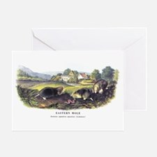 Aububon Mole Animal Greeting Card