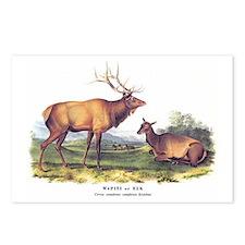 Audubon Elk Animal Postcards (Package of 8)