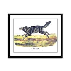 Audubon Gray Wolf Animal Framed Panel Print
