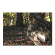 Wolf Portrait Side View Postcards (Package of 8)