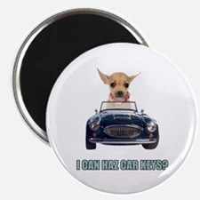 Chihuahua Driving Car Magnet