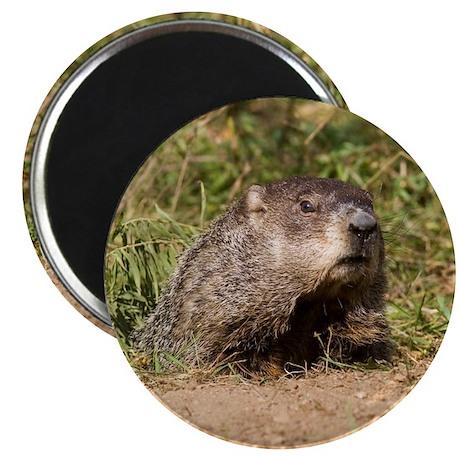 Groundhog Magnet