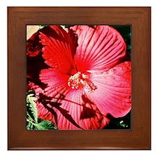 Dinner Plate Hibiscus - Framed Tile