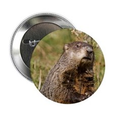"""Groundhog 2.25"""" Button (10 pack)"""