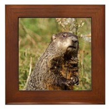 Groundhog Framed Tile