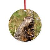 Groundhog Round Ornaments