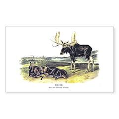 Audubon Moose Animal Rectangle Decal