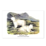 Audubon Mountain Goat Animal Postcards (Package of