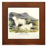 Audubon Mountain Goat Animal Framed Tile