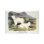 Audubon Mountain Goat Animal Rectangle Magnet (10