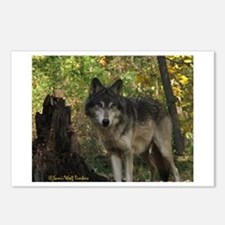 Wolf Spirit Postcards (Package of 8)