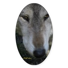 Wolf Portrait Oval Decal