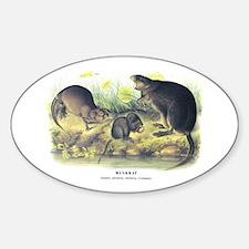Audubon Muskrat Animal Oval Decal