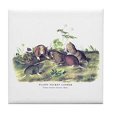 Audubon Gopher Animal Tile Coaster
