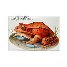 California Red-Legged Frog Rectangle Magnet