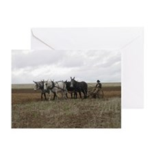 Unique Mule Greeting Cards (Pk of 10)