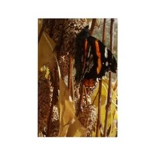 Autumn Butterfly Rectangle Magnet
