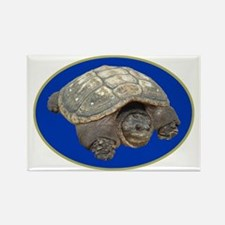 Snapping Turtle Rectangle Magnet (100 pack)