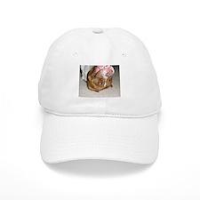 Honey Bunny Baseball Cap