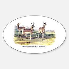 Audubon Pronghorn Antelope Oval Decal