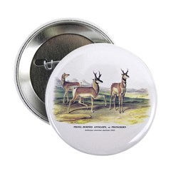 "Audubon Pronghorn Antelope 2.25"" Button"