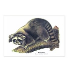 Audubon Raccoon Coon Postcards (Package of 8)