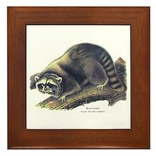 Audubon Raccoon Coon Framed Tile