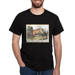 Audubon Red Fox Animal (Front) T-Shirt