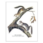 Audubon Red Squirrel Small Poster