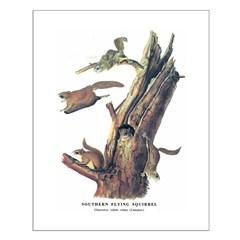Audubon Flying Squirrel Posters