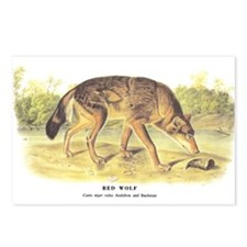 Audubon Red Wolf Animal Postcards (Package of 8)