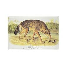 Audubon Red Wolf Animal Rectangle Magnet