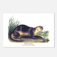 Audubon River Otter Animal Postcards (Package of 8