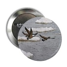 "Flying Canadian Geese 2.25"" Button (100 pack)"