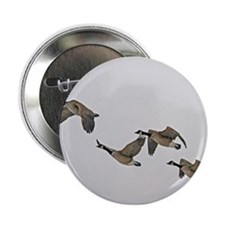 "Canadian Geese In Flight 2.25"" Button"