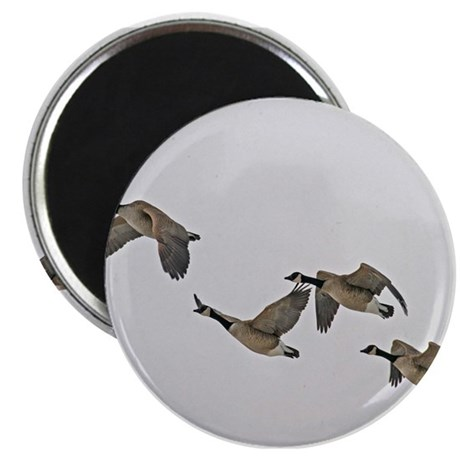 "Canadian Geese In Flight 2.25"" Magnet (10 pack)"