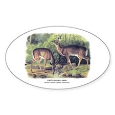 Audubon White-Tailed Deer Oval Decal