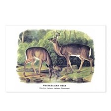 Audubon White-Tailed Deer Postcards (Package of 8)