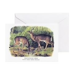 Audubon White-Tailed Deer Greeting Cards (Pk of 20
