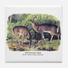 Audubon White-Tailed Deer Tile Coaster