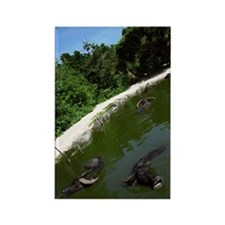 Water Buffalo 2 Rectangle Magnet