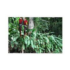 Scarlet (RED) Macaws Rectangle Magnet