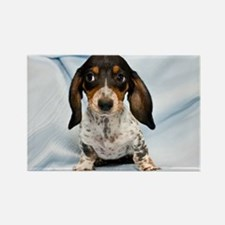 Speckled Puppy Rectangle Magnet