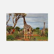Funny Giraffe head Rectangle Magnet