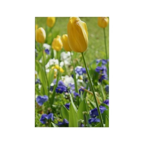 Spring Tulips Rectangle Magnet (100 pack)