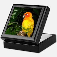 Sun Conure Bird Tile-Topped Box