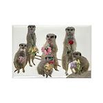 Meerkat Rectangle Magnet (100 pack)