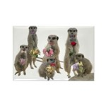 Meerkat Rectangle Magnet (10 pack)