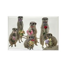 Meerkat Rectangle Magnet