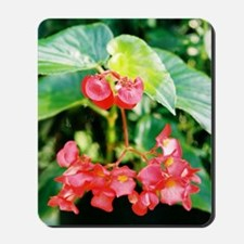 Red Begonia - Mousepad